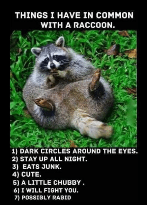 things-i-have-in-common-with-a-raccoon-1-dark-8126084